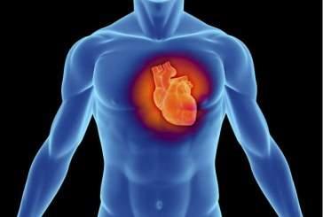 Ученые пересадят свиное сердце человеку