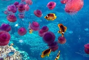 Массовая гибель медуз вызвана очисткой моря от нефтяных пятен
