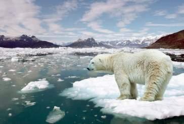 Ученые из России и США будут спасать Арктику от глобального потепления