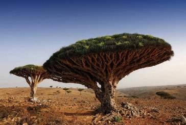 Ученые смогут «вырастить» бензин на деревьях