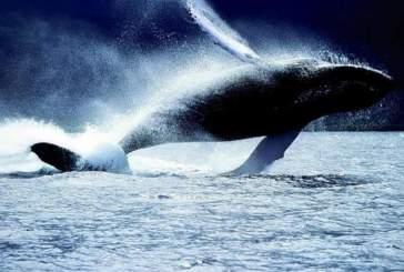 Пению китов 26 миллионов лет
