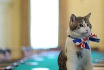 Бездомный кот нашел работу в МИД Великобритании