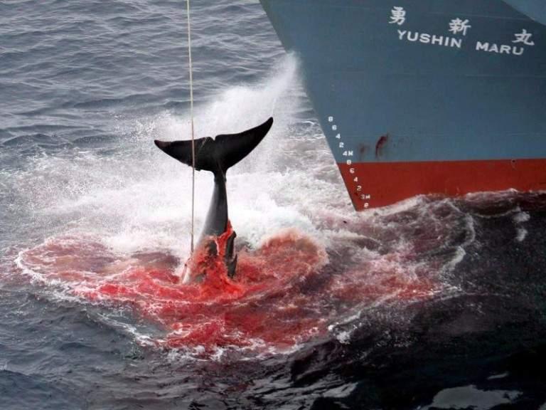 ловля китов