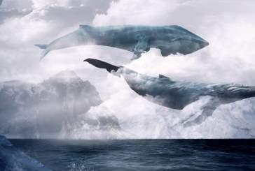 Бессмертные души китов