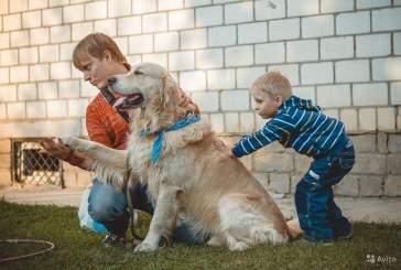 Ученые: собаки реагируют на команды в зависимости от эмоций людей