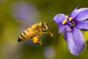 Ученые: пчелы действительно видят электрические поля