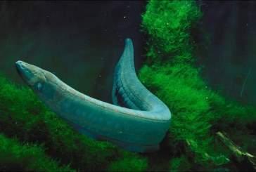 Ученые доказали: рыбы могут перемещаться по суше