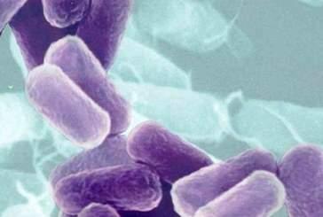Тысяча генов остается активной после смерти