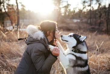 Собаки дважды становились лучшим другом человека
