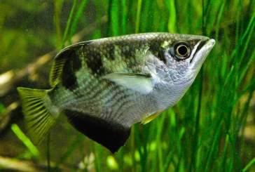 Ученые: тропические рыбки умеют распознавать лица людей