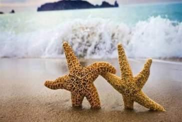 Человека и морскую звезду объединяет гормон, отвечающий за половое созревание