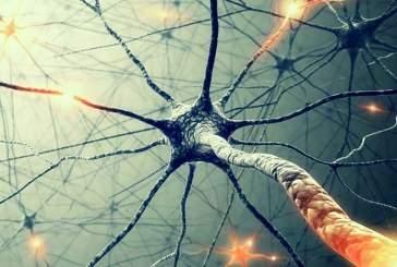 Учёные доказали, что нужно всего два нейрона, чтобы принять решение
