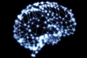 Почему существует иерархия в биологических системах: новое понимание способствует развитию искусственного интеллекта