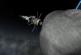 Видео: NASA готовит миссию по захвату астероида