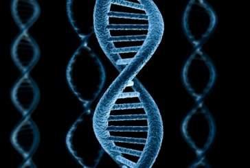 Тайна ДНК наконец-то разгадана!