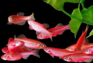 Неуловимые рыбы защищаются от хищников