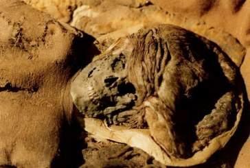 Как мумифицированная мышь поможет в исследовании рака