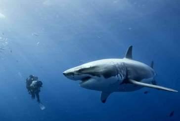 Акулы — ключ к выращиванию новых зубов у человека