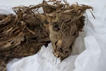 Почему тысячелетняя собака похоронена под зоопарком в Лиме?