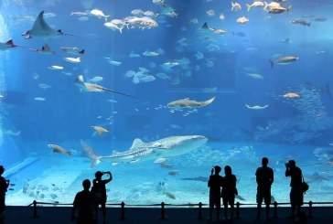 Во Владивостоке откроется крупнейший в мире океанариум