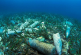 В Вашингтоне считают, что пластик к 2050 году вытеснит рыбу из океана