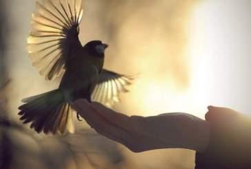 Орнитологи расшифровали язык птиц