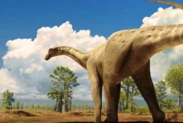В Сибири обнаружен неизвестный ранее вид  динозавров