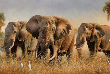 Популяция животных за последние 40 лет уменьшилась почти на 60%