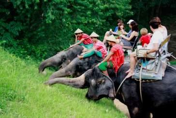 Крупнейший сайт о путешествиях TripAdvisor выступает за защиту животных