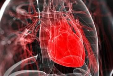 Оказалось, что оксиданты полезны для сердца