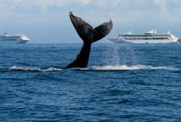 Шум морских судов угрожает существованию китов и других жителей океана — видео