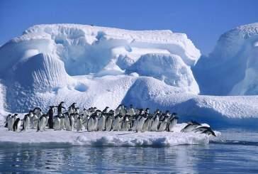 В Антарктике будет создан крупнейший в мире морской заповедник