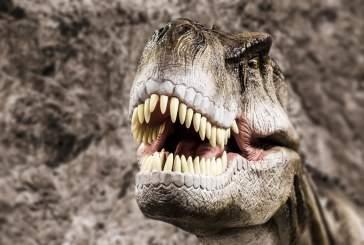 Климат будут изучать по зубам древних животных