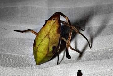 В Китае найден паук — мастер мимикрии