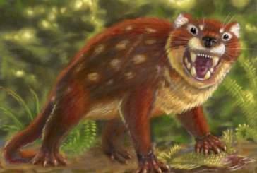 Найдено млекопитающее, обладавшее самым сильным укусом