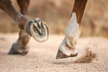 Есть ли пальцы у лошадей и сколько их?