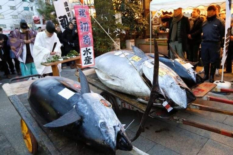 Нааукционе вЯпонии продали голубого тунца за323 тыс. долларов