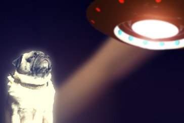 Уфологи: Собаки могут чувствовать приближение НЛО