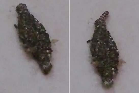 На видео запечатлено странное создание, которое может оказаться пришельцем