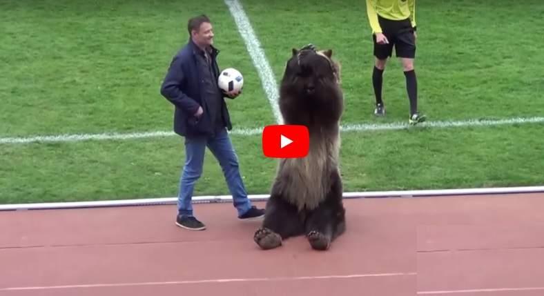 Матч ПФЛ вПятигорске открыл медведь Тима. Нехватило балалаек и Владимира Путина