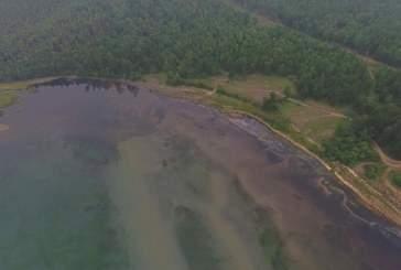 Байкал находится на грани экологической катастрофы из-за опасных водорослей