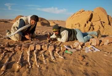 Антропологи выяснили, что на Филиппинах первопоселенцы появились более 700 тысяч лет назад