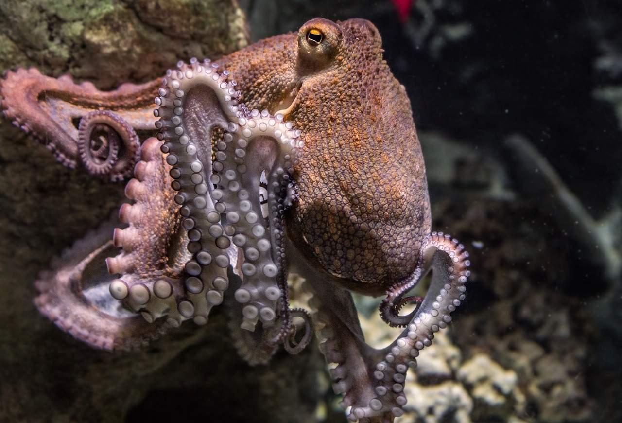 Ученые: Осьминоги пришли наЗемлю изкосмоса миллионы лет назад
