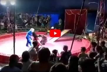 Опубликовано видео нападения медведя на дрессировщика в цирке под Волгоградом