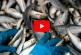 Экологи рассказали о массовой гибели сельди возле берегов Сахалина