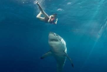 В Египте акула растерзала туриста из Чехии