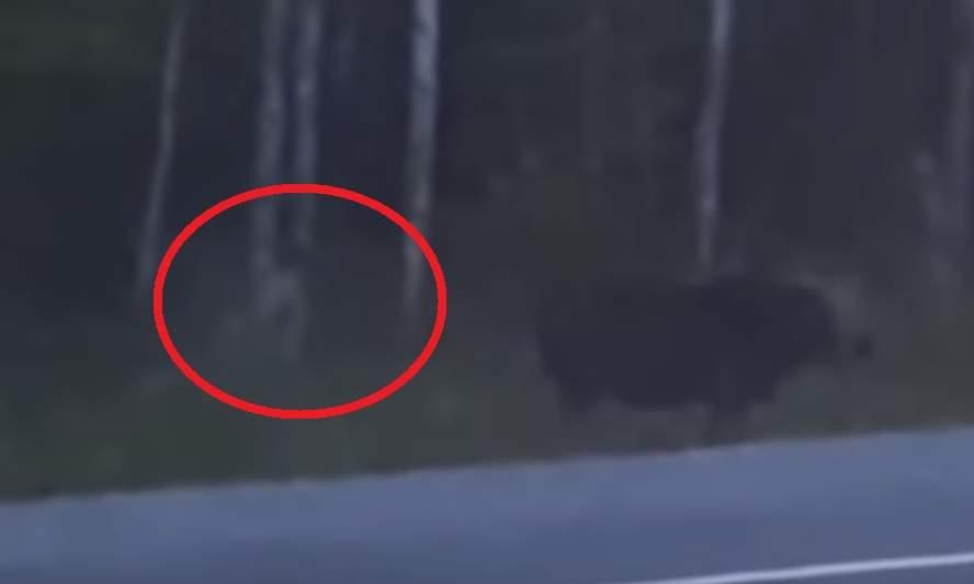 ВКанаде женщина сняла видео с чудовищным «человекоподобным существом»