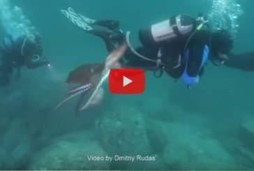 Опубликовано видео нападения огромного осьминога на дайвера в Приморье