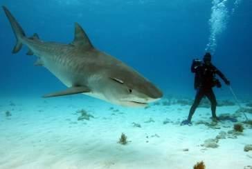 Акула набросилась на участника чемпионата по подводной охоте в Приморье