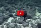 Необычную рыбу-пеликана с огромным ртом запечатлели на видео на Гавайях